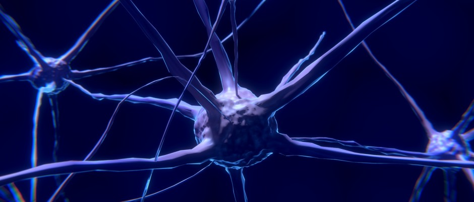 nerve-cell-2213009_1920
