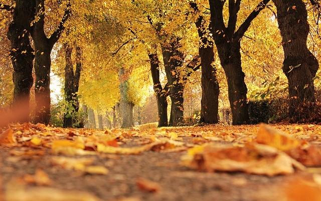 trees-1789120_640